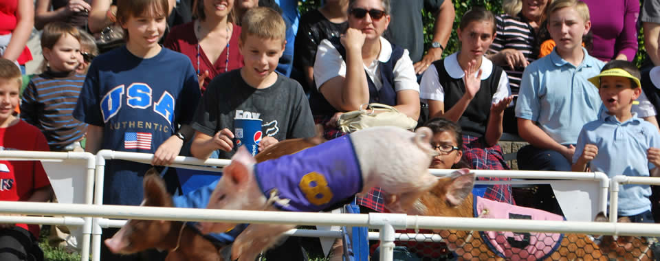 Hurdlers and Crowd - All Alaskan Pigs