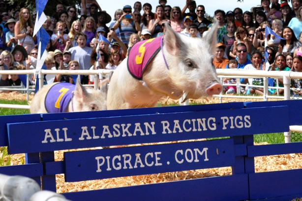 Alaskan Racing Pigs WFA 2015